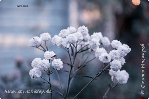 Мой сад.Мой Nikon. фото 6
