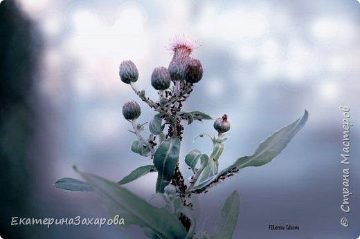Мой сад.Мой Nikon. фото 7