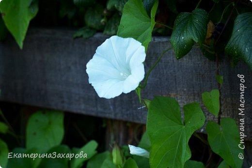 Мой сад.Мой Nikon. фото 11