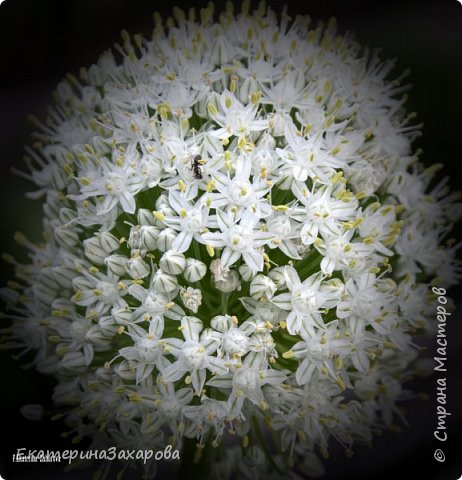 Мой сад.Мой Nikon. фото 8