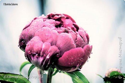 Мой сад.Мой Nikon. фото 1