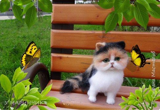 ПУШИНКА.Котенок из шерсти фото 3