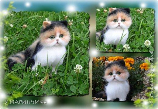 ПУШИНКА.Котенок из шерсти фото 4
