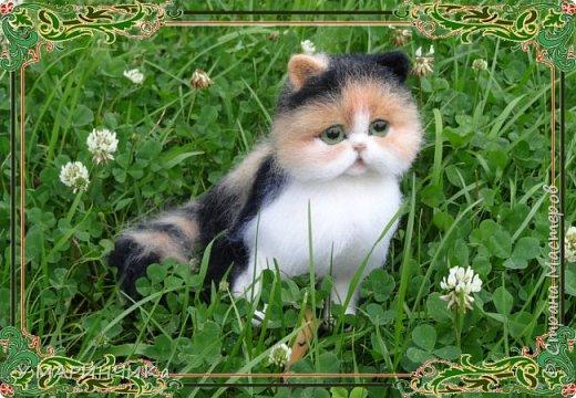 ПУШИНКА.Котенок из шерсти