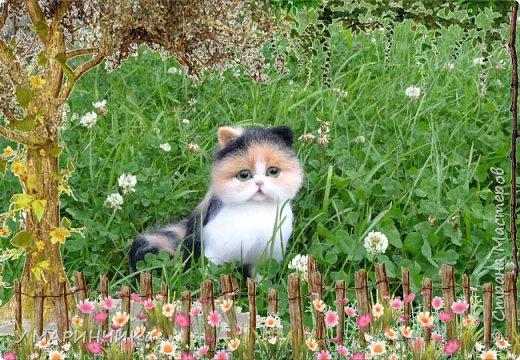 ПУШИНКА.Котенок из шерсти фото 2