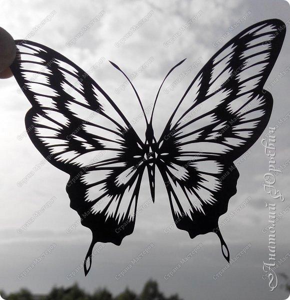 """Всем доброго времени суток! Вашему вниманию хочу представить несколько  новых работ. Бабочки для украшения и интерьера. - Решил сделать бабочек """"найденных"""" на просторах интернета. - Немного изменил и сделал по своему. - Вырезано из картона с тиснением под """"кожу"""" (плотность 230г/м2). фото 12"""