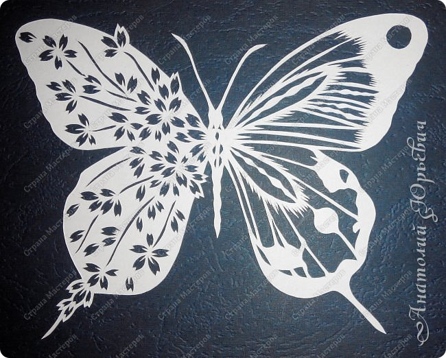 """Всем доброго времени суток! Вашему вниманию хочу представить несколько  новых работ. Бабочки для украшения и интерьера. - Решил сделать бабочек """"найденных"""" на просторах интернета. - Немного изменил и сделал по своему. - Вырезано из картона с тиснением под """"кожу"""" (плотность 230г/м2). фото 4"""