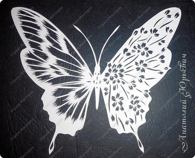 """Всем доброго времени суток! Вашему вниманию хочу представить несколько  новых работ. Бабочки для украшения и интерьера. - Решил сделать бабочек """"найденных"""" на просторах интернета. - Немного изменил и сделал по своему. - Вырезано из картона с тиснением под """"кожу"""" (плотность 230г/м2). фото 5"""