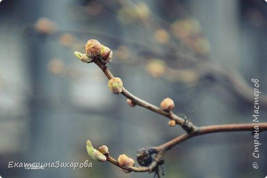 Мой сад.Мой Nikon 2. фото 4