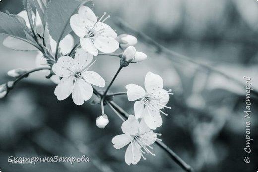 Мой сад.Мой Nikon 2. фото 6