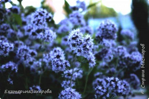 Мой сад.Мой Nikon 2. фото 13