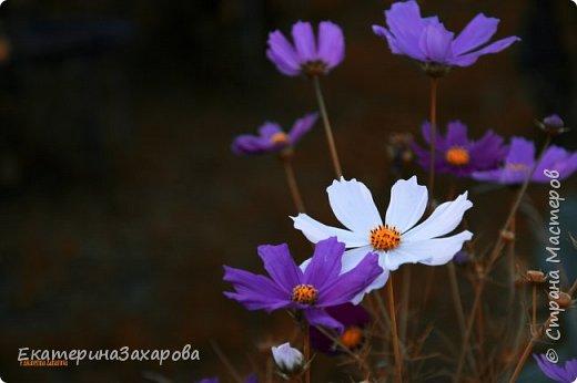 Мой сад.Мой Nikon 2. фото 7