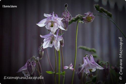 Мой сад.Мой Nikon 2. фото 5