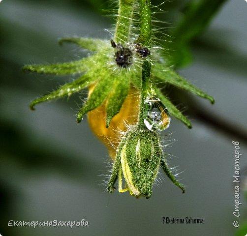 Мой сад.Мой Nikon 2. фото 14