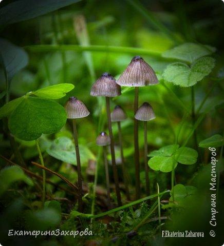 Мой сад.Мой Nikon 2. фото 10