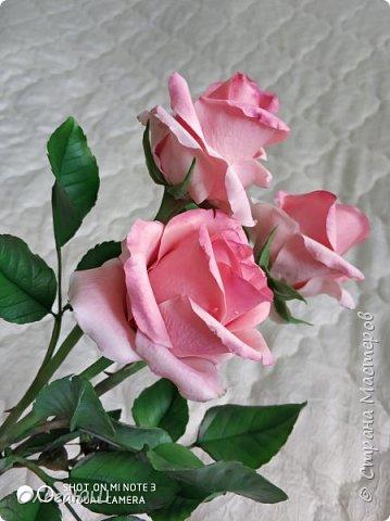 розовое настроение фото 1