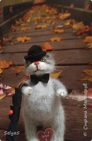Мистер кот фото 3