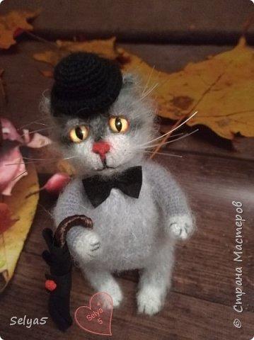 Мистер кот фото 1