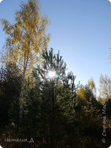 Всем привет! Нас посетило бабье лето.... оно странное  - тепло и солнечно днем, ночами заморозки.... Нам повезло - вторая неделя отпуска как раз совпала с этим самым бабьем летом... началась любимая русская игра - выполнить за 3 погожих дня то, что запланировано на 2 недели.... И даже в таком плотном графике я нашла времечко прогуляться в лес... без всякой надежды найти грибы, НО.....  фото 14