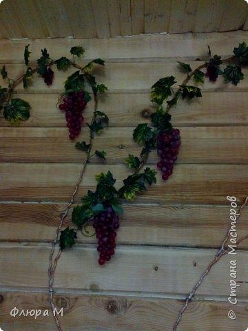 Виноградная лоза  фото 2