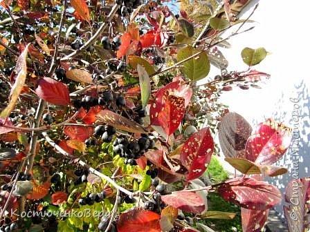 Осень в полном разгаре. фото 3