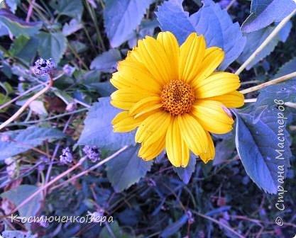 Осень в полном разгаре. фото 13