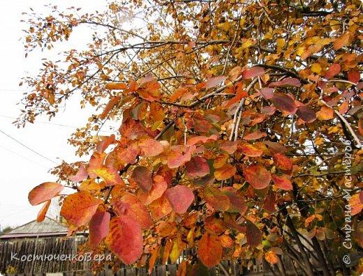 Осень в полном разгаре. фото 1
