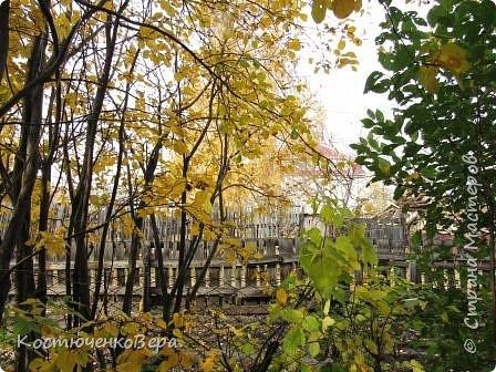 Осень в полном разгаре. фото 2