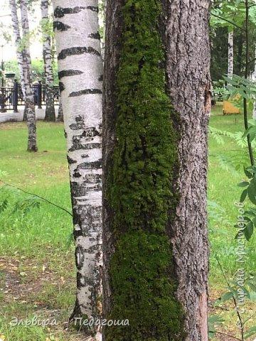"""Какая же в этом году красивая осень была. Просто бесподобная! Так долго держались листики на деревьях, и вот подул ветерок.... листья закружились в хороводе. А один листик оторвался и полетел в своё недолгое путешествие. Эту фотографию я так и назвала """"Путешествие осеннего листика"""".  фото 19"""