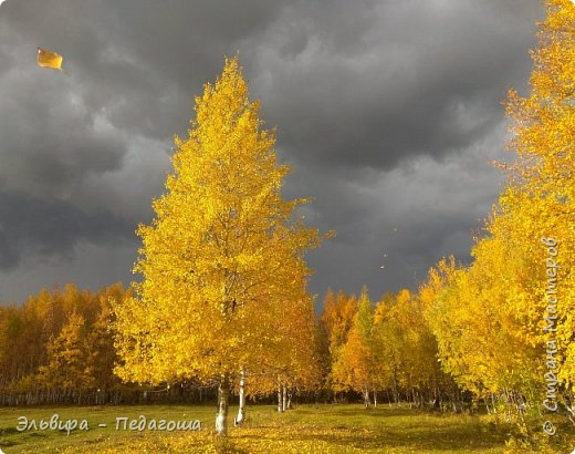 """Какая же в этом году красивая осень была. Просто бесподобная! Так долго держались листики на деревьях, и вот подул ветерок.... листья закружились в хороводе. А один листик оторвался и полетел в своё недолгое путешествие. Эту фотографию я так и назвала """"Путешествие осеннего листика"""".  фото 1"""