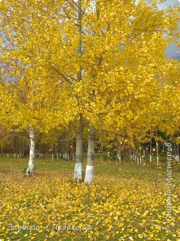 """Какая же в этом году красивая осень была. Просто бесподобная! Так долго держались листики на деревьях, и вот подул ветерок.... листья закружились в хороводе. А один листик оторвался и полетел в своё недолгое путешествие. Эту фотографию я так и назвала """"Путешествие осеннего листика"""".  фото 2"""