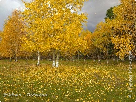 """Какая же в этом году красивая осень была. Просто бесподобная! Так долго держались листики на деревьях, и вот подул ветерок.... листья закружились в хороводе. А один листик оторвался и полетел в своё недолгое путешествие. Эту фотографию я так и назвала """"Путешествие осеннего листика"""".  фото 3"""