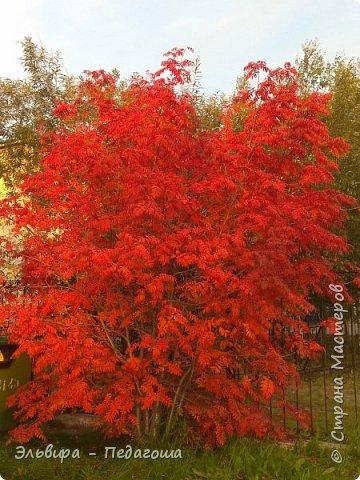 """Какая же в этом году красивая осень была. Просто бесподобная! Так долго держались листики на деревьях, и вот подул ветерок.... листья закружились в хороводе. А один листик оторвался и полетел в своё недолгое путешествие. Эту фотографию я так и назвала """"Путешествие осеннего листика"""".  фото 24"""