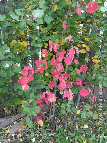 """Какая же в этом году красивая осень была. Просто бесподобная! Так долго держались листики на деревьях, и вот подул ветерок.... листья закружились в хороводе. А один листик оторвался и полетел в своё недолгое путешествие. Эту фотографию я так и назвала """"Путешествие осеннего листика"""".  фото 10"""