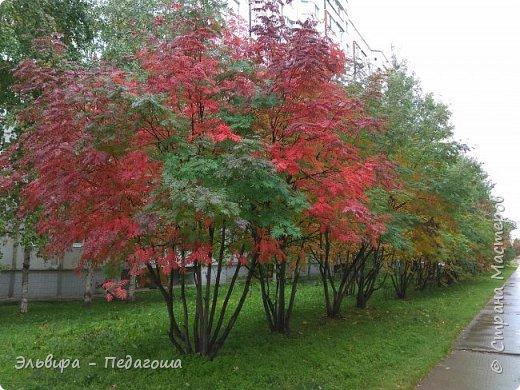 """Какая же в этом году красивая осень была. Просто бесподобная! Так долго держались листики на деревьях, и вот подул ветерок.... листья закружились в хороводе. А один листик оторвался и полетел в своё недолгое путешествие. Эту фотографию я так и назвала """"Путешествие осеннего листика"""".  фото 17"""