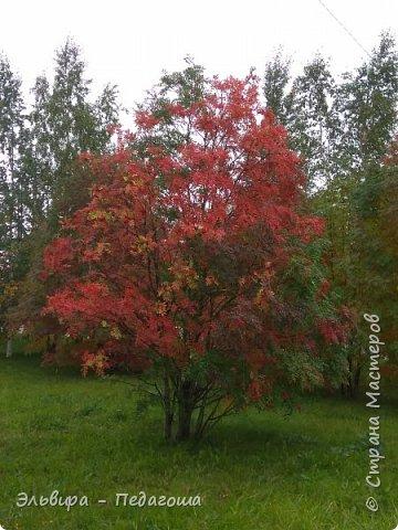 """Какая же в этом году красивая осень была. Просто бесподобная! Так долго держались листики на деревьях, и вот подул ветерок.... листья закружились в хороводе. А один листик оторвался и полетел в своё недолгое путешествие. Эту фотографию я так и назвала """"Путешествие осеннего листика"""".  фото 18"""
