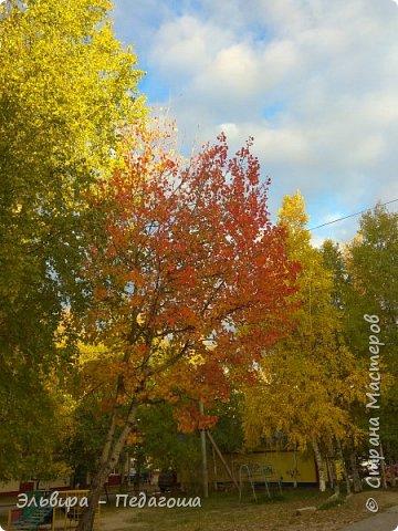 """Какая же в этом году красивая осень была. Просто бесподобная! Так долго держались листики на деревьях, и вот подул ветерок.... листья закружились в хороводе. А один листик оторвался и полетел в своё недолгое путешествие. Эту фотографию я так и назвала """"Путешествие осеннего листика"""".  фото 22"""