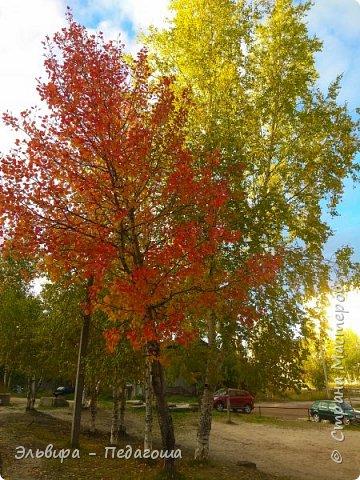 """Какая же в этом году красивая осень была. Просто бесподобная! Так долго держались листики на деревьях, и вот подул ветерок.... листья закружились в хороводе. А один листик оторвался и полетел в своё недолгое путешествие. Эту фотографию я так и назвала """"Путешествие осеннего листика"""".  фото 23"""