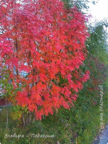 """Какая же в этом году красивая осень была. Просто бесподобная! Так долго держались листики на деревьях, и вот подул ветерок.... листья закружились в хороводе. А один листик оторвался и полетел в своё недолгое путешествие. Эту фотографию я так и назвала """"Путешествие осеннего листика"""".  фото 21"""