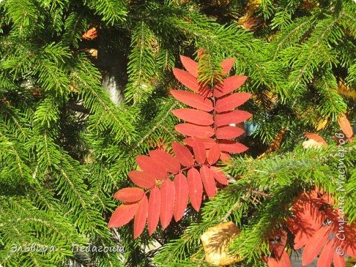 """Какая же в этом году красивая осень была. Просто бесподобная! Так долго держались листики на деревьях, и вот подул ветерок.... листья закружились в хороводе. А один листик оторвался и полетел в своё недолгое путешествие. Эту фотографию я так и назвала """"Путешествие осеннего листика"""".  фото 5"""