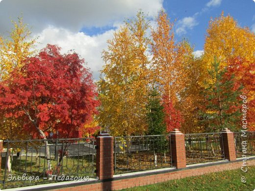 """Какая же в этом году красивая осень была. Просто бесподобная! Так долго держались листики на деревьях, и вот подул ветерок.... листья закружились в хороводе. А один листик оторвался и полетел в своё недолгое путешествие. Эту фотографию я так и назвала """"Путешествие осеннего листика"""".  фото 6"""