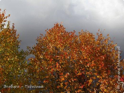 """Какая же в этом году красивая осень была. Просто бесподобная! Так долго держались листики на деревьях, и вот подул ветерок.... листья закружились в хороводе. А один листик оторвался и полетел в своё недолгое путешествие. Эту фотографию я так и назвала """"Путешествие осеннего листика"""".  фото 8"""