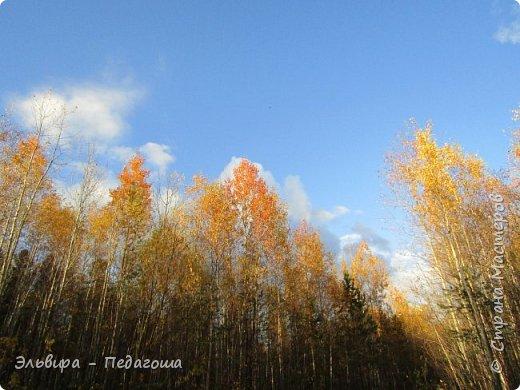 """Какая же в этом году красивая осень была. Просто бесподобная! Так долго держались листики на деревьях, и вот подул ветерок.... листья закружились в хороводе. А один листик оторвался и полетел в своё недолгое путешествие. Эту фотографию я так и назвала """"Путешествие осеннего листика"""".  фото 13"""