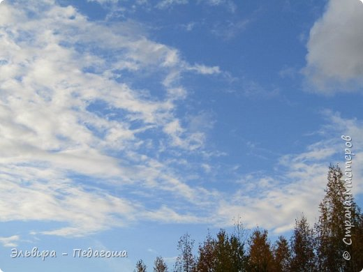 """Какая же в этом году красивая осень была. Просто бесподобная! Так долго держались листики на деревьях, и вот подул ветерок.... листья закружились в хороводе. А один листик оторвался и полетел в своё недолгое путешествие. Эту фотографию я так и назвала """"Путешествие осеннего листика"""".  фото 15"""