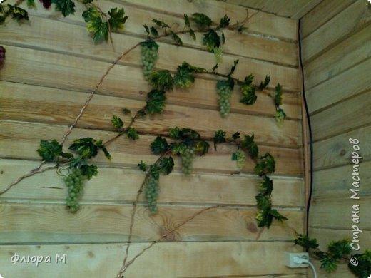 Виноградная лоза  фото 3