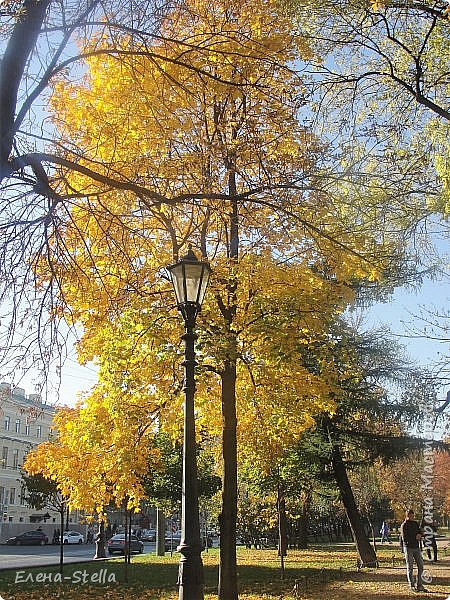 Друзья предлагаю прогуляться по Адмиралтейскому парку (Александровский) В парке много старых деревьев. Сегодня хорошая погодка. Солнце и тепло. Это только часть прогулки, остальное, если получиться в продолжении. Мозаика в вестебюле метро Адмиралтейская. фото 4