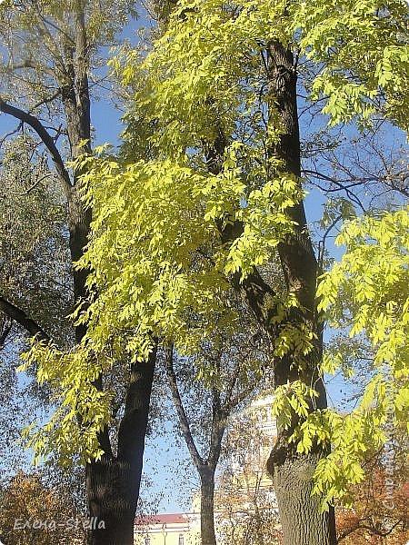 Друзья предлагаю прогуляться по Адмиралтейскому парку (Александровский) В парке много старых деревьев. Сегодня хорошая погодка. Солнце и тепло. Это только часть прогулки, остальное, если получиться в продолжении. Мозаика в вестебюле метро Адмиралтейская. фото 6