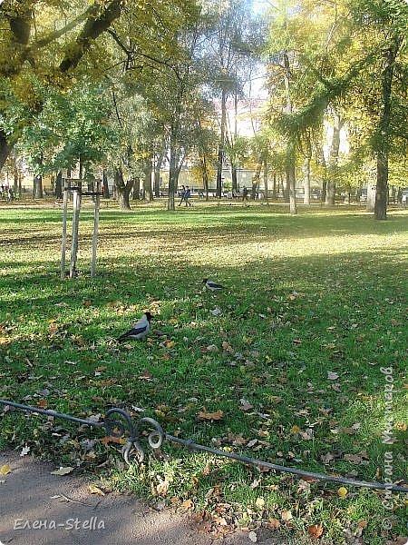 Друзья предлагаю прогуляться по Адмиралтейскому парку (Александровский) В парке много старых деревьев. Сегодня хорошая погодка. Солнце и тепло. Это только часть прогулки, остальное, если получиться в продолжении. Мозаика в вестебюле метро Адмиралтейская. фото 7