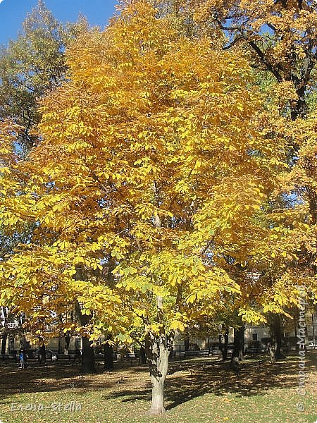 Друзья предлагаю прогуляться по Адмиралтейскому парку (Александровский) В парке много старых деревьев. Сегодня хорошая погодка. Солнце и тепло. Это только часть прогулки, остальное, если получиться в продолжении. Мозаика в вестебюле метро Адмиралтейская. фото 9