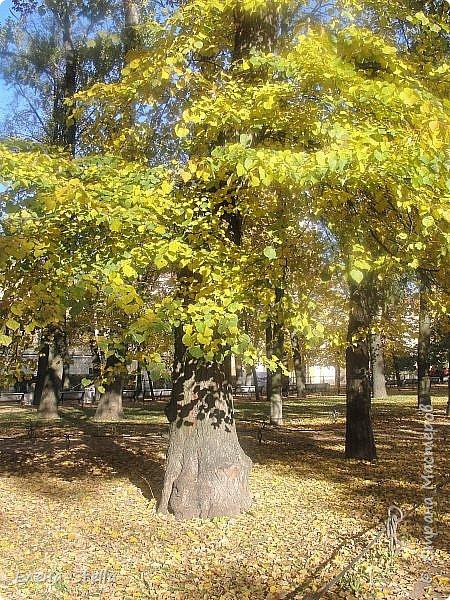 Друзья предлагаю прогуляться по Адмиралтейскому парку (Александровский) В парке много старых деревьев. Сегодня хорошая погодка. Солнце и тепло. Это только часть прогулки, остальное, если получиться в продолжении. Мозаика в вестебюле метро Адмиралтейская. фото 12